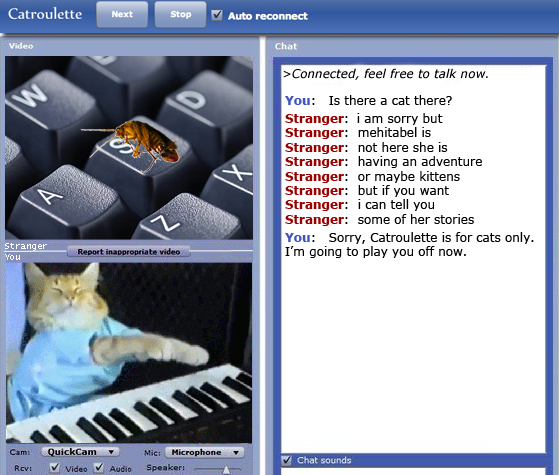 Archy meets Keyboard Cat in Catroulette / Chatroulette