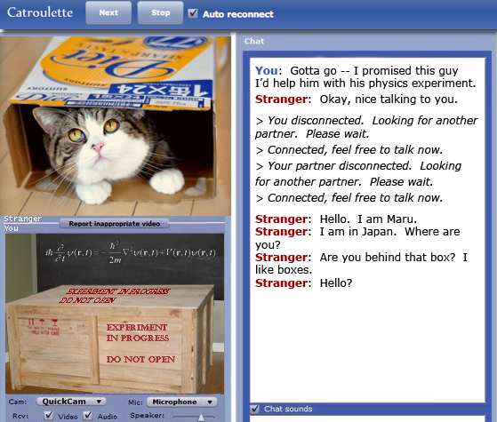 Maru meets Schroedinger's cat in Catroulette / Chatroulette