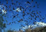 A cloud of bats