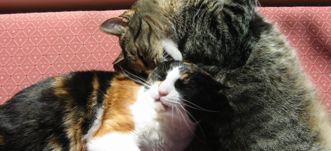 two cats curled up together