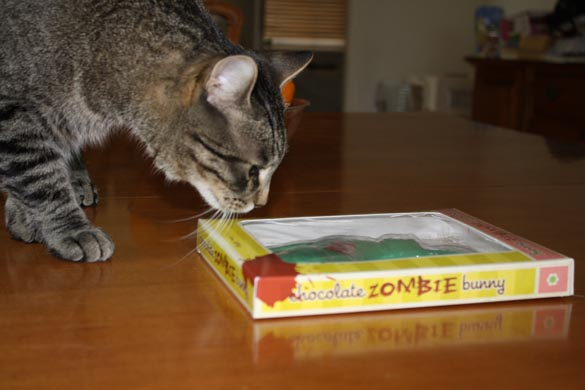 Cat inspecting a zombie chocolate bunny