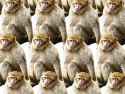 An infinite number of monkeys packed closely together.
