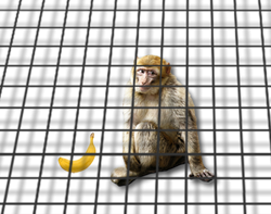 A monkey in a cage that extends infinitely in two dimensions but not the third, ignoring a banana.