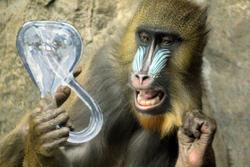Infinite Monkey Cage Tour