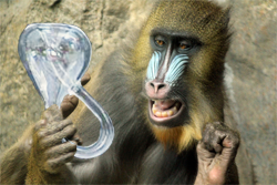 A monkey contemplating a Klein bottle.