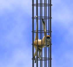 A monkey in an infiniteyly tall cylindrical cage.