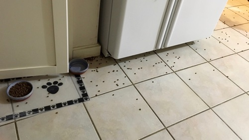 cat food scattered across the kitchen floor